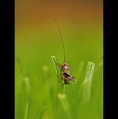 Grasshopper, by Jagger