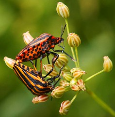 Insects, unknown