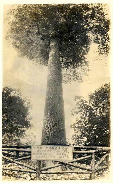 Logging Era Grayling MI Monster Hartwick Michigan White Pine called the Monarch RPPC 1942 at the Memorial Park prior to Hartwick becoming a State Park