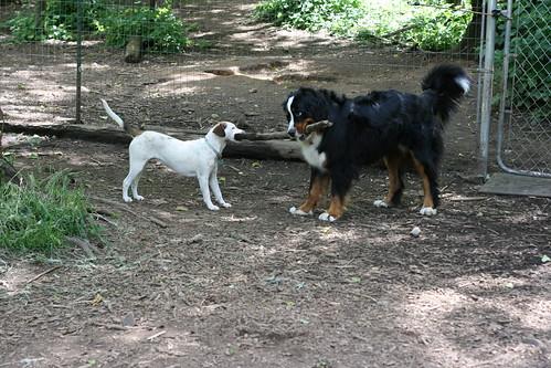אל תריבו על העצמות. cc: flickr by eliduke | Bone-A-Fide Dog Ranch