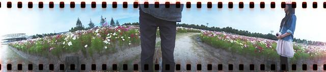 spinner360° コスモス畑