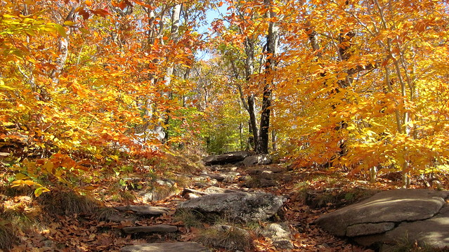 Autumn on Mount Wachusett