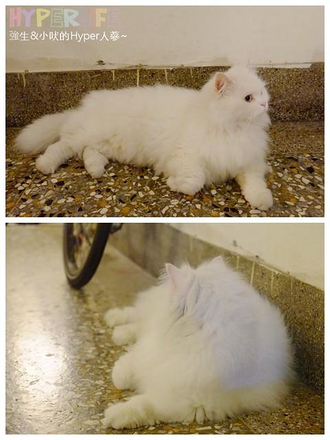 巷子有貓 (2)
