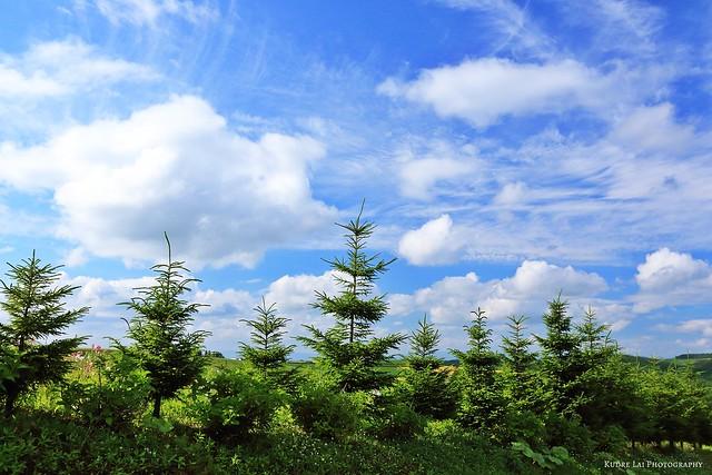 柔柔旋律在迴響,遠方山林在呼喚(forest and clouds)