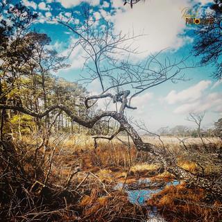 Beautiful Landscape - Chincoteague Island