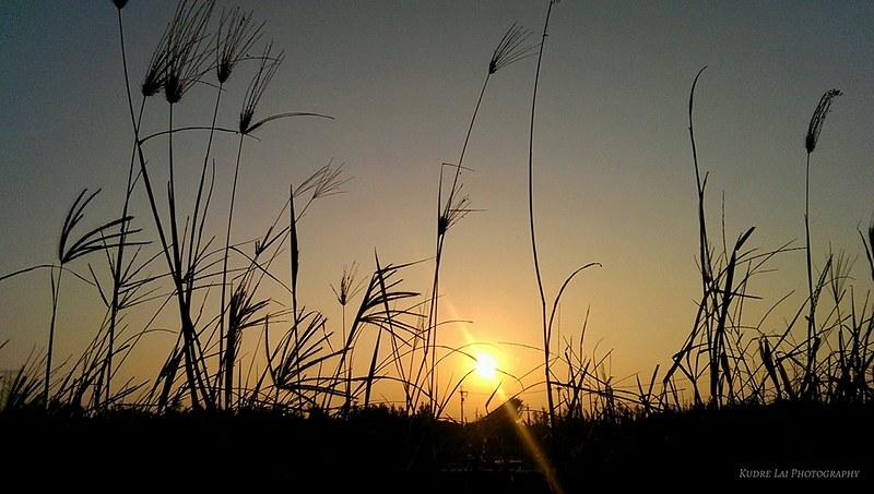 元氣朝陽(vitality sunrise)