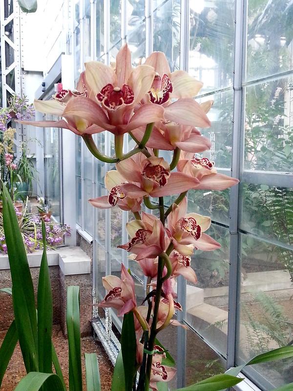 20130307_165752 United States Botanical Garden Conservatory