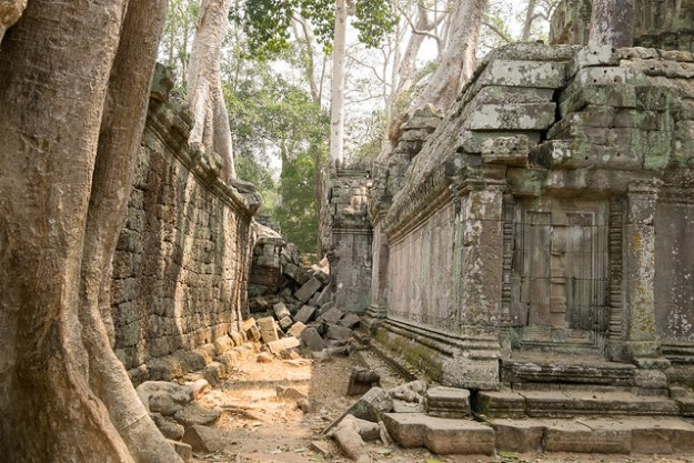 Wall and tree tunnel. Ta Prohm, Angkor