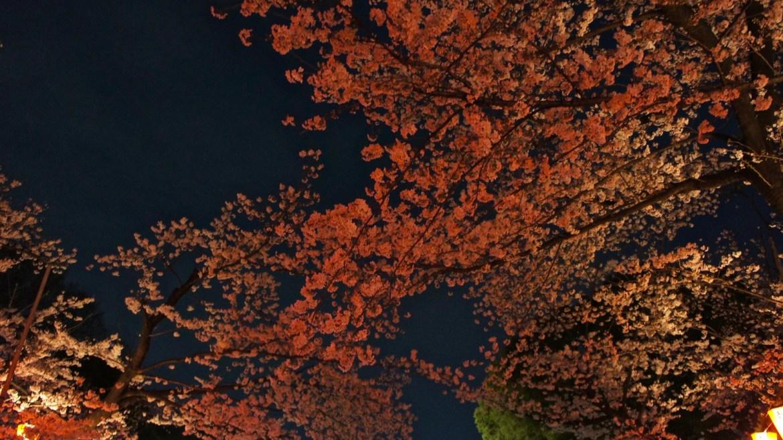 Ueno Park Sakura Illumination