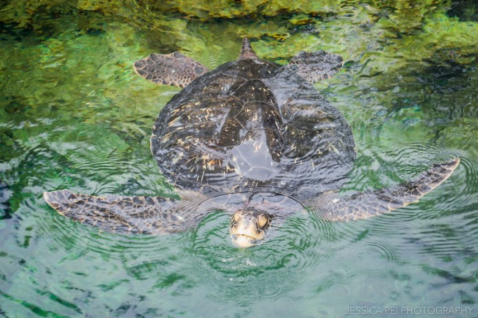 Sea World Orlando Turtle