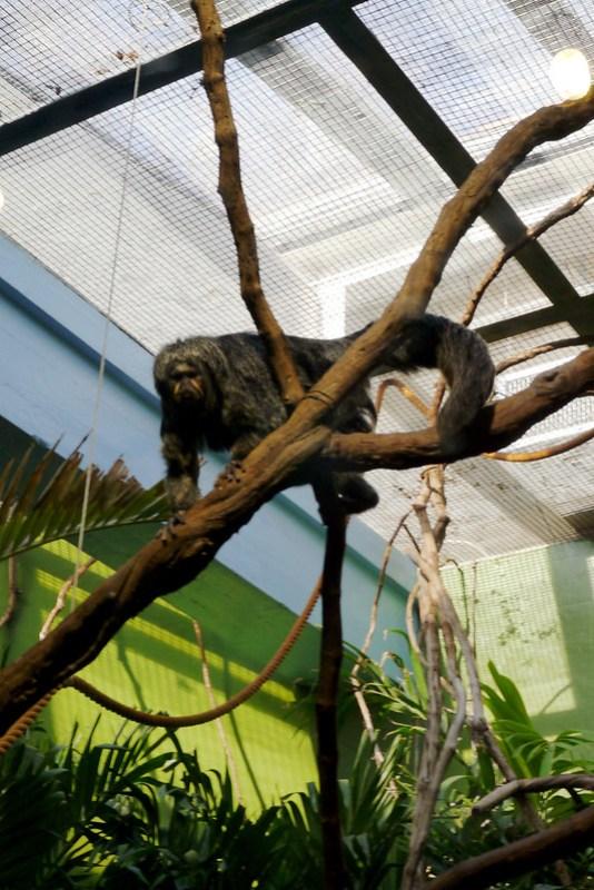20130304 National Zoological Park, Washington DC 100