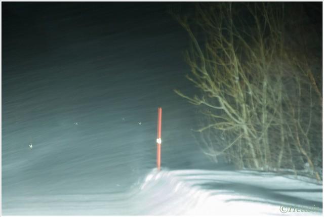 sneeuwbui (HP003258)