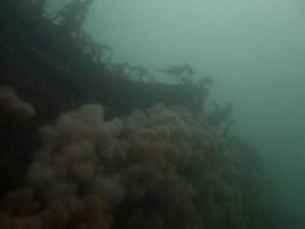 Huge boulder reef