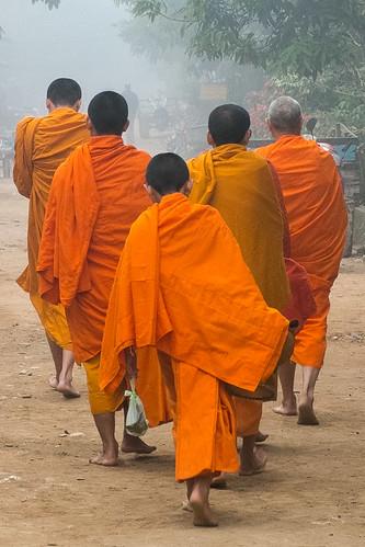 A flock of monks. Muang Ngoi Neua