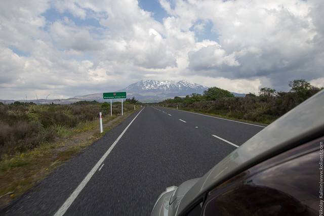 NZ_12-60