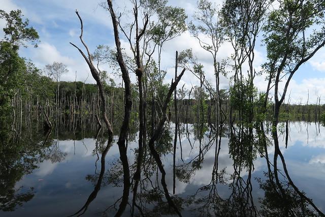 tree reflection pattern amazon tupana river