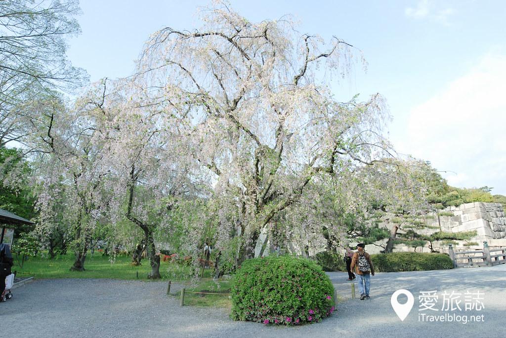京都赏樱景点 元离宫二条城 25
