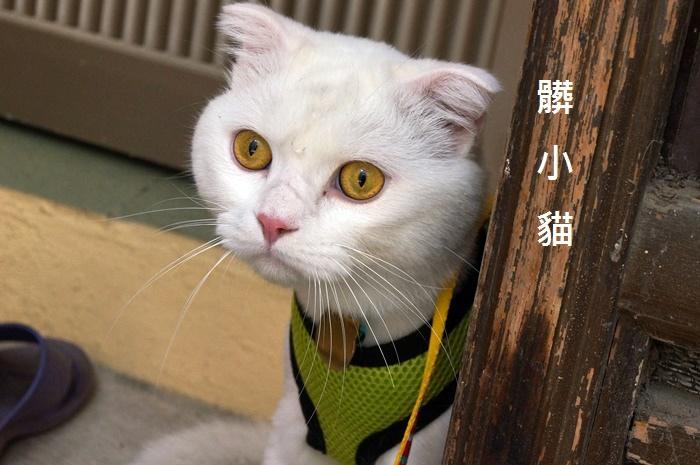 貓白白 戶外體驗貓白白