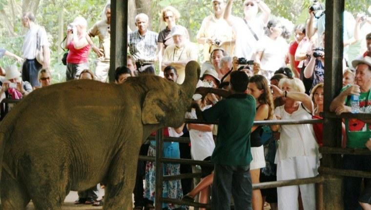 22 Pinnawala Elephant Orphanage