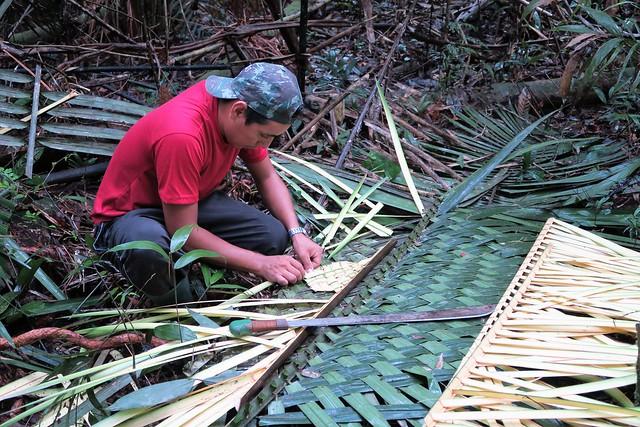 guide amazon rainforest tupna making shelter tree branch