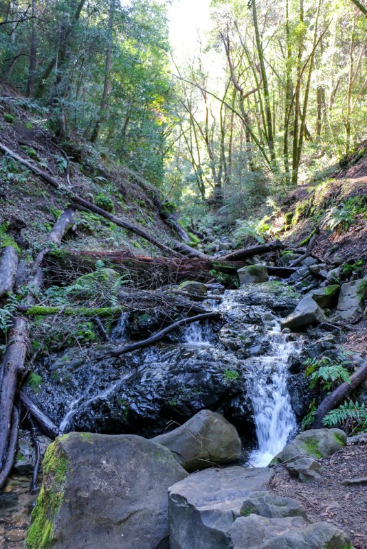 02.21. Uvas Canyon