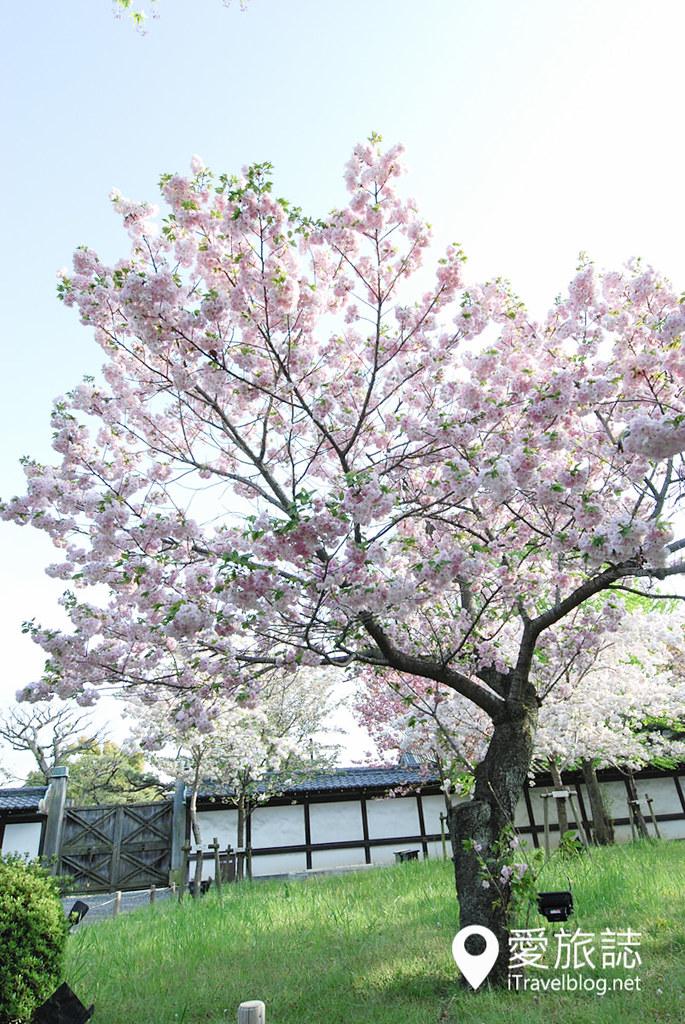 京都赏樱景点 元离宫二条城 37