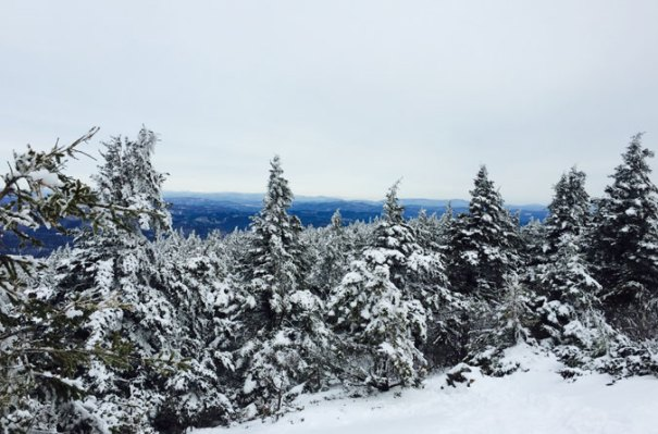 Mt. Kearsarge Treeline