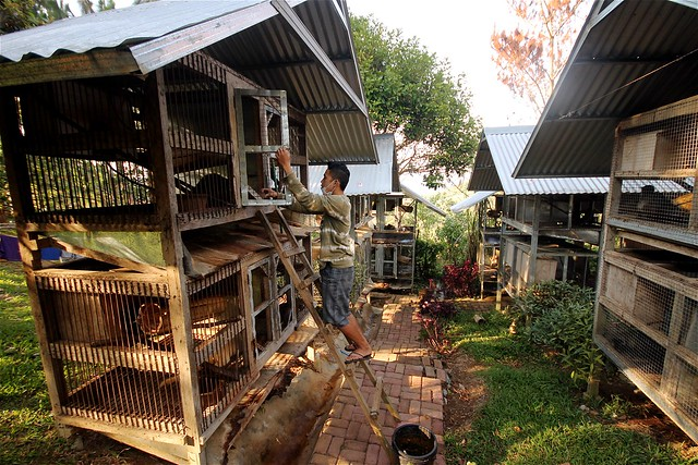 Civet Coffee Farm