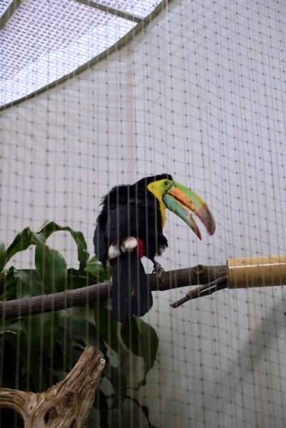 20130304 National Zoological Park, Washington DC 034