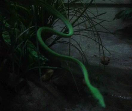 """Friendly"" green snake"