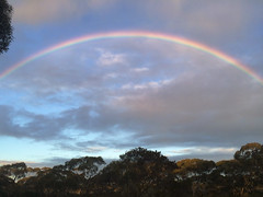 rainbow Nullarbor