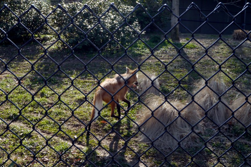 20130304 National Zoological Park, Washington DC 082