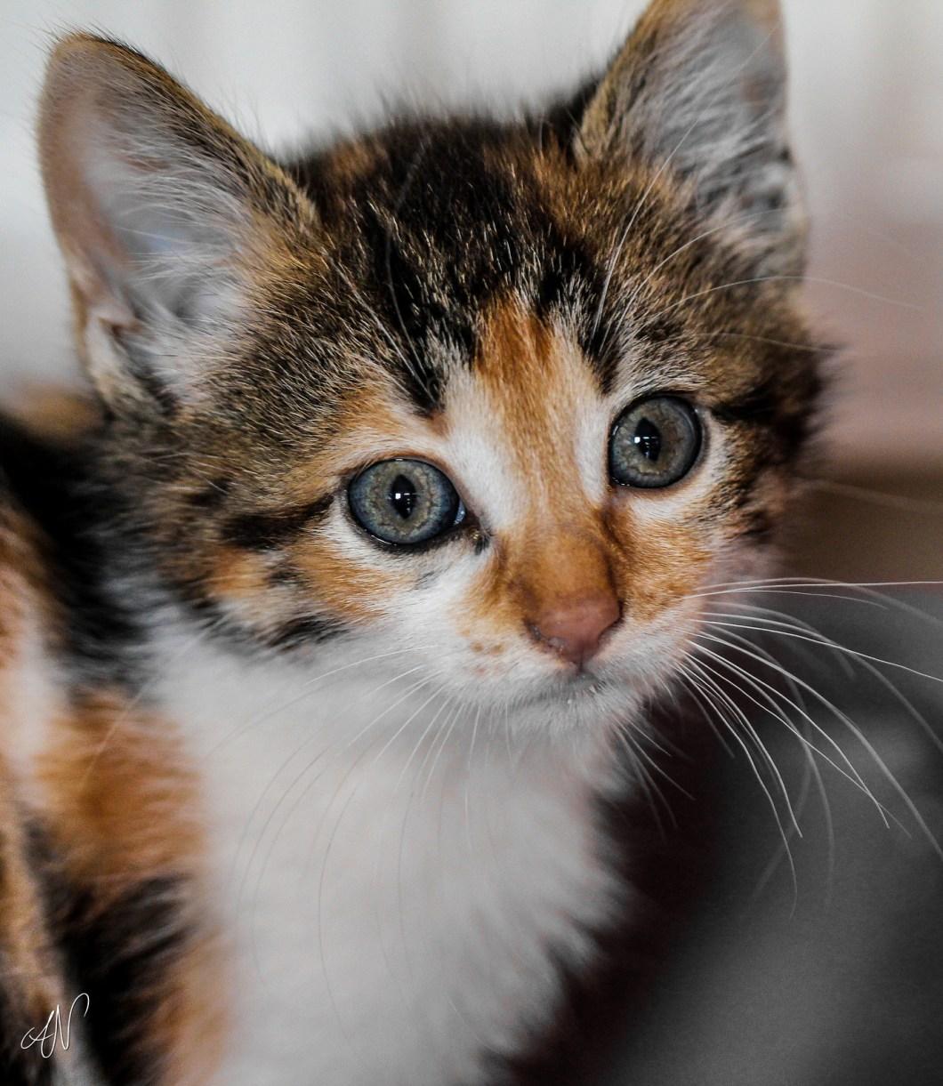 Imagen gratis de un bonito gatito