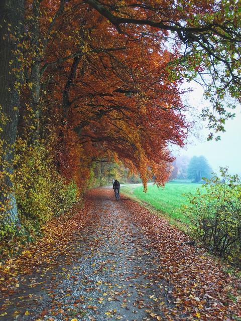 Visual Witness EyeEm Traveling Shootermag ShotoniPhone6s EyeEm In Germany Fall Beauty Vscocam