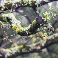 0313 - wet oak