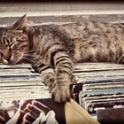 Record Sleeper (Istanbul, 2012) #cats #cat...