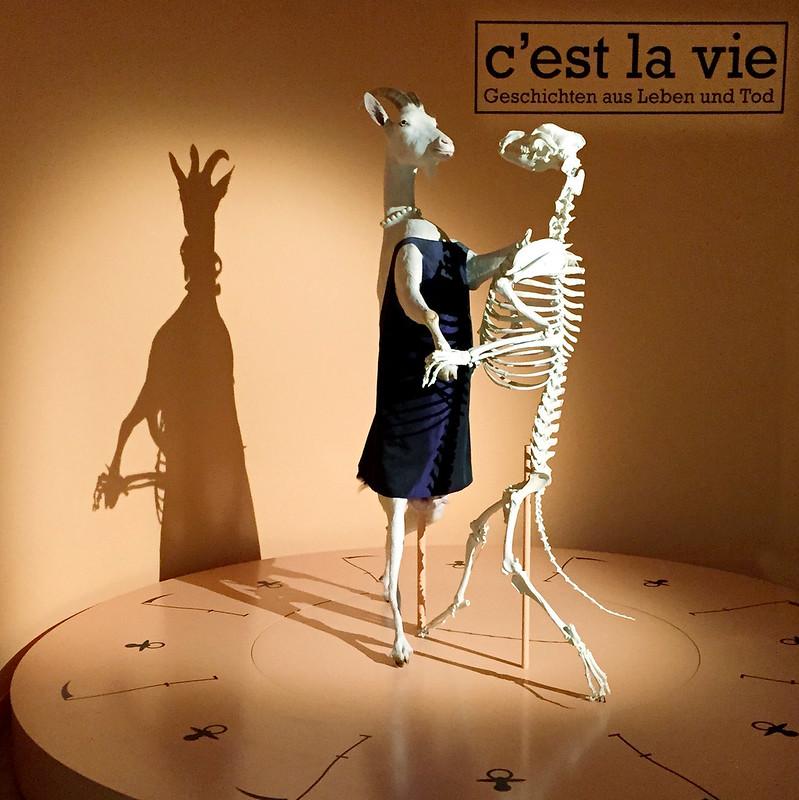 Dancing goat, C'est la Vie Exhibit.