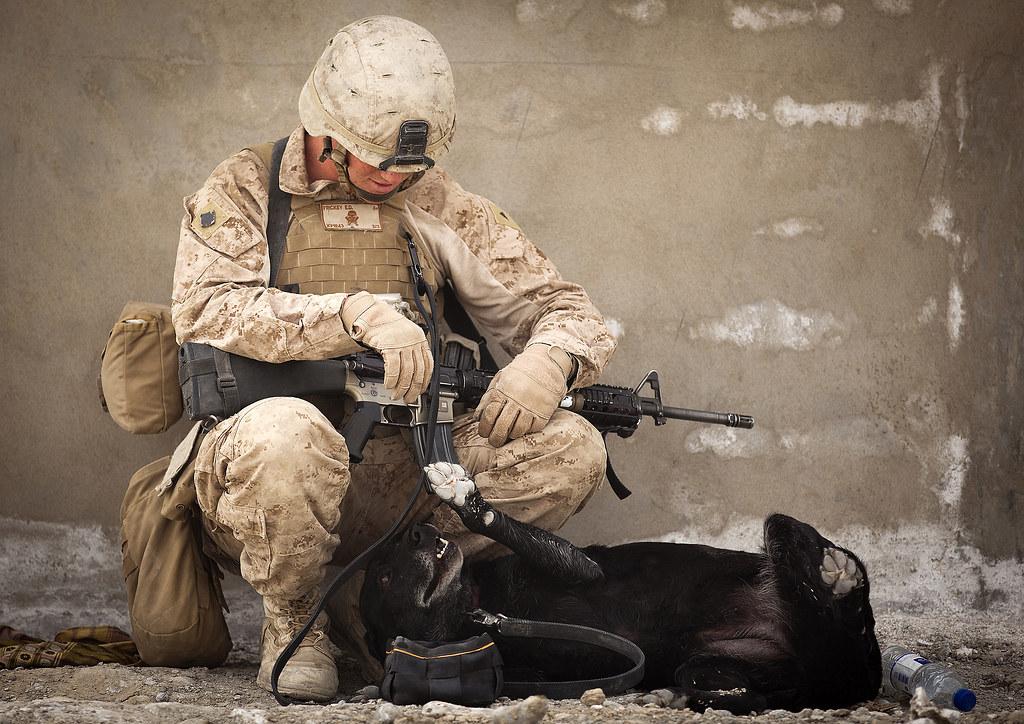 Imagen gratis de un soldado con un perro