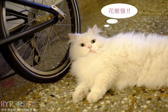 巷子有貓 (11)