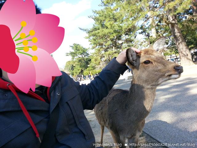 奈良一日遊