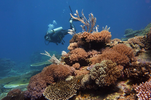 Scuba Diving in Honda Bay