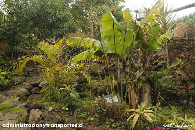 Jardín Botánico Tau Kiani (Isla de Pascua)
