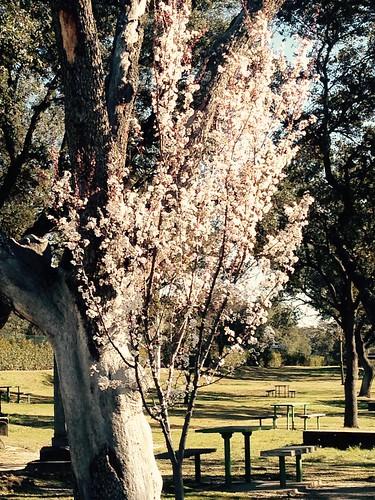 Primavera, Madrid
