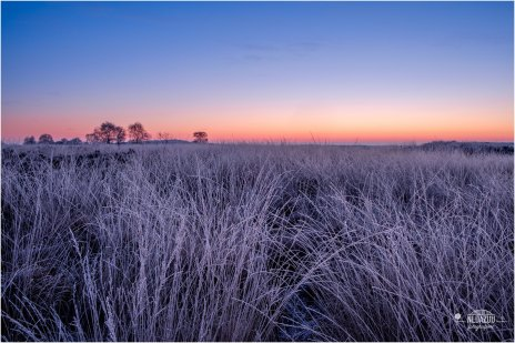 Hot 'n Cold Ginkelseheide -9° C this morning