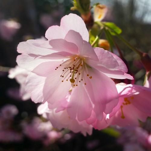 Blossoms in sunshine