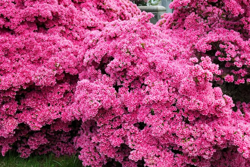 wilmington-brandywine-historical-cemetary-pink-flowers-stones