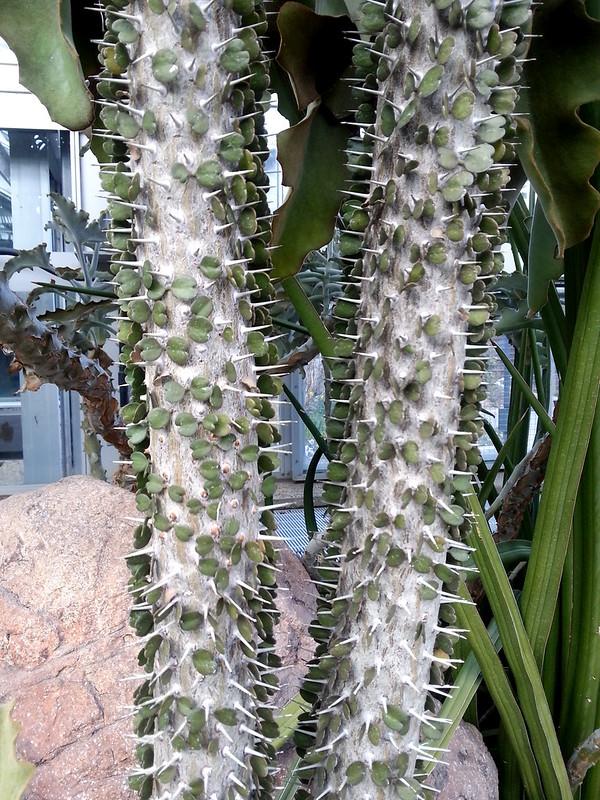 20130307_162844 United States Botanical Garden Conservatory