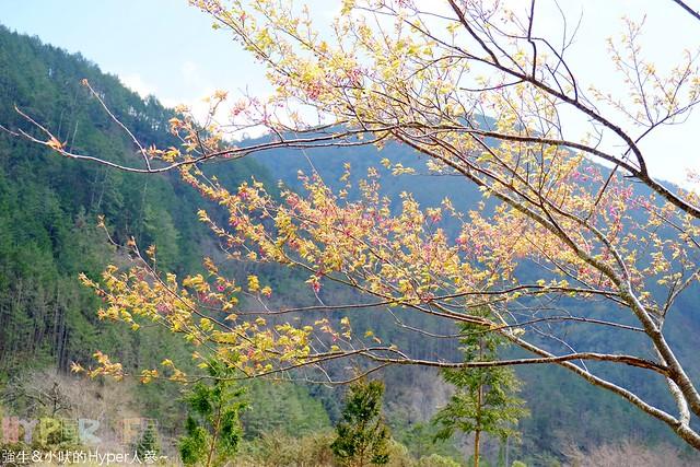 合歡山&武陵農場 (27)