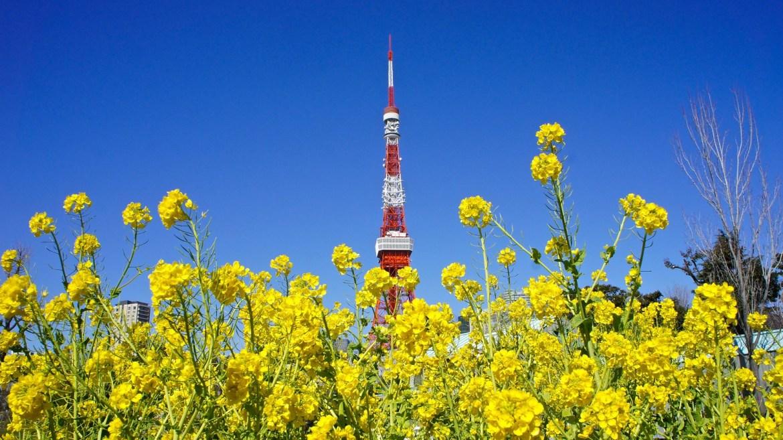 Shiba Koen Plum Blossoms (Ume)