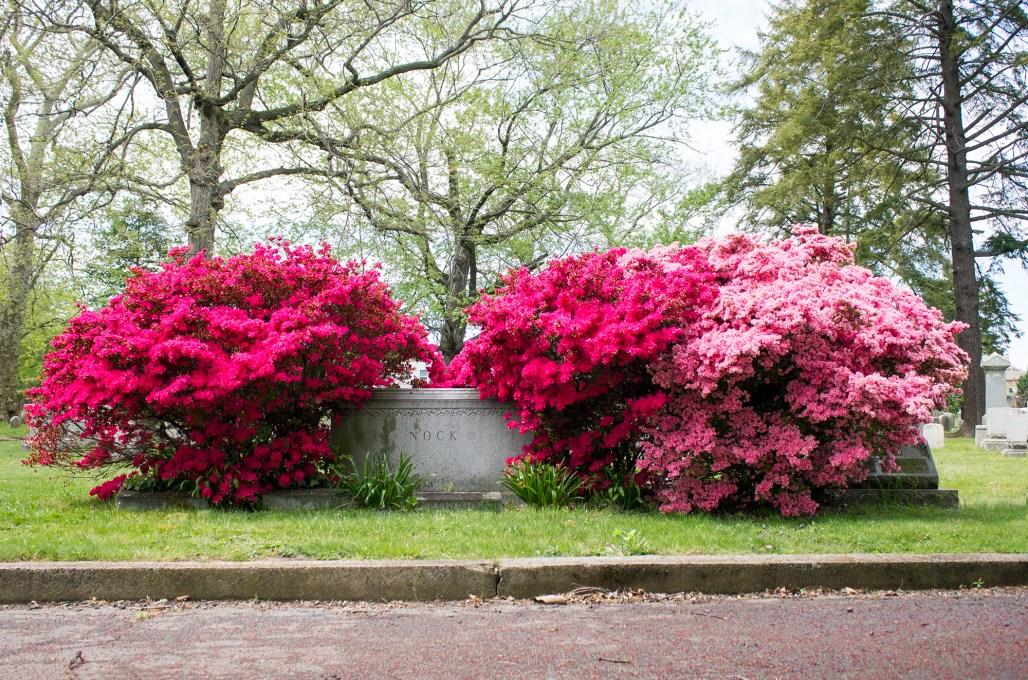 wilmington-brandywine-historical-cemetary-flower-bushes
